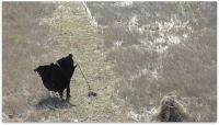 Γιώργος Γεροντίδης  Ένα κομμάτι γης, τρίπτυχο βίντεο, 28', 20', 16', 2013-14  Συλλογές Κρατικού Μουσείου Σύγχρονης Τέχνης